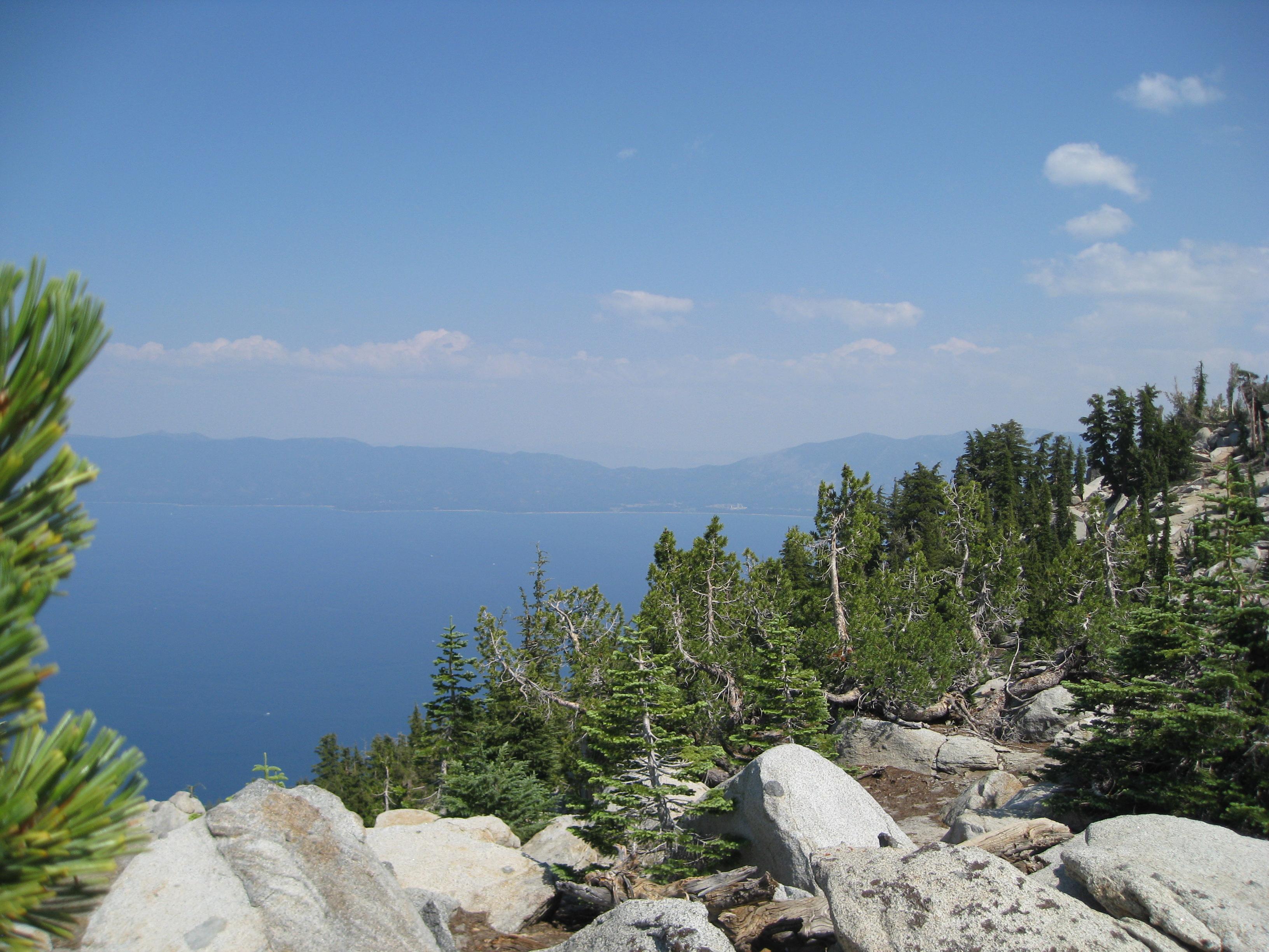 conifers surrounding lake tahoe