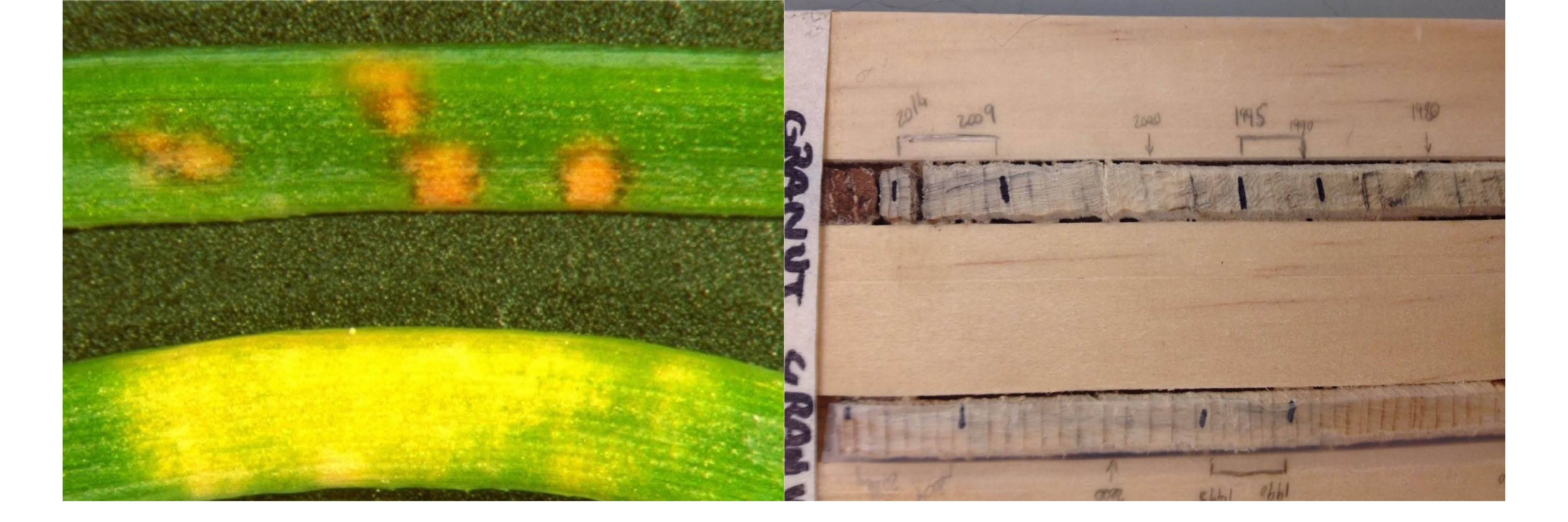 Close up of leaf and measurements in action