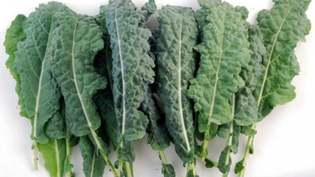 Lettuce meet kale your new friend with benefits